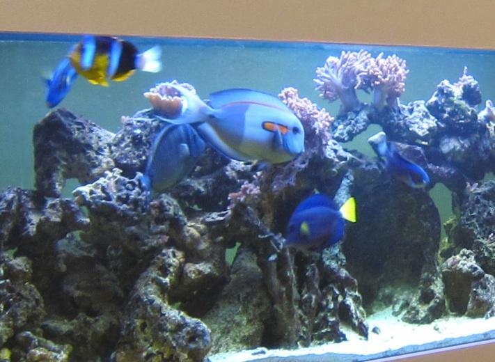 Fish close-up 2